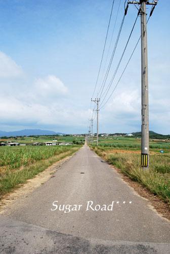2009八重山-135.jpg